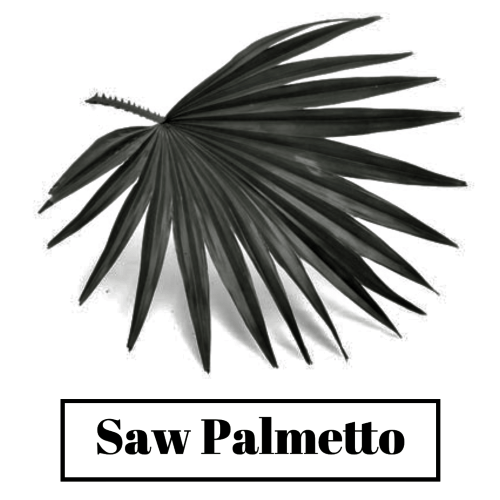 Good results on Google SERP when searching for 'Saw Palmetto for hair'